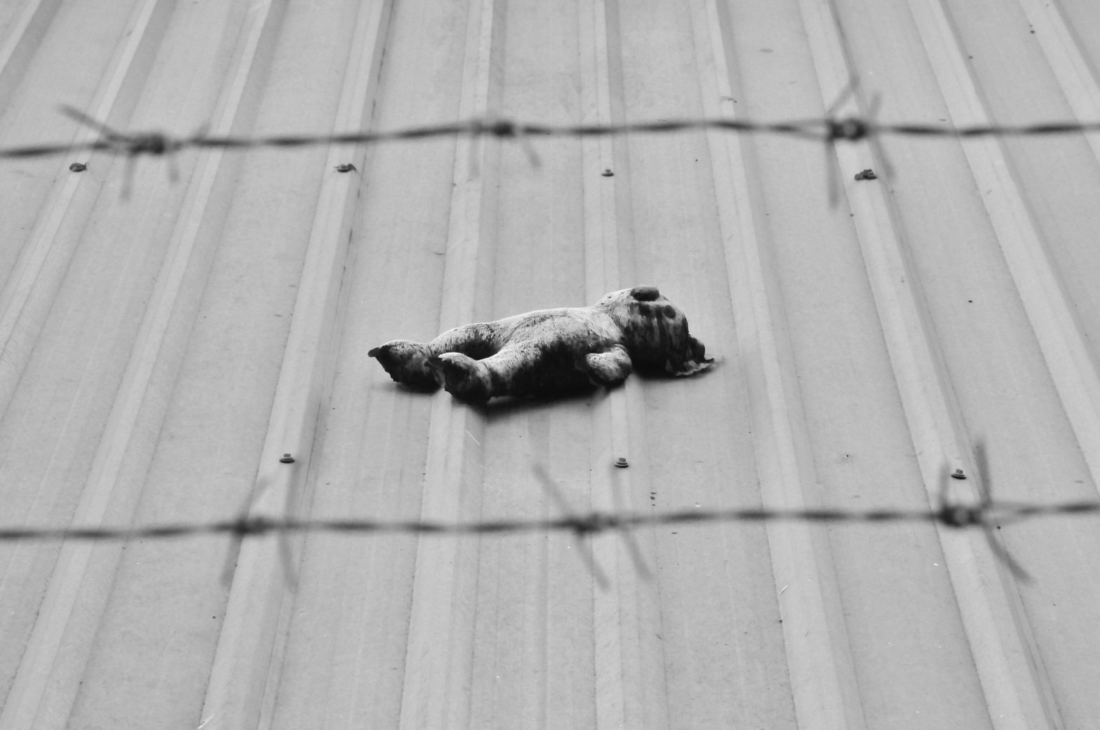 A stuffed animal lies on a corrugated roof; in the foreground is barbed wire.